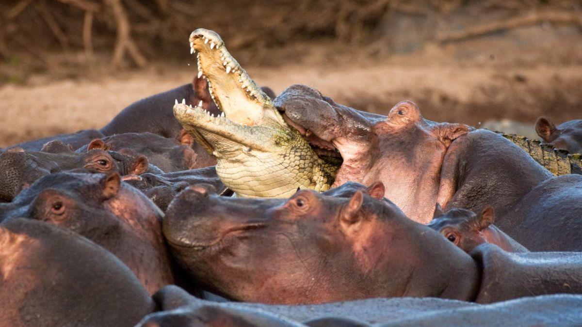 Хо-д-Ор и слезы Верховного Крокодила